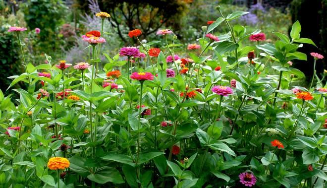 Flowers by Natureland - February 2014 - 1556256_10151835880186269_250757387_o.jpg